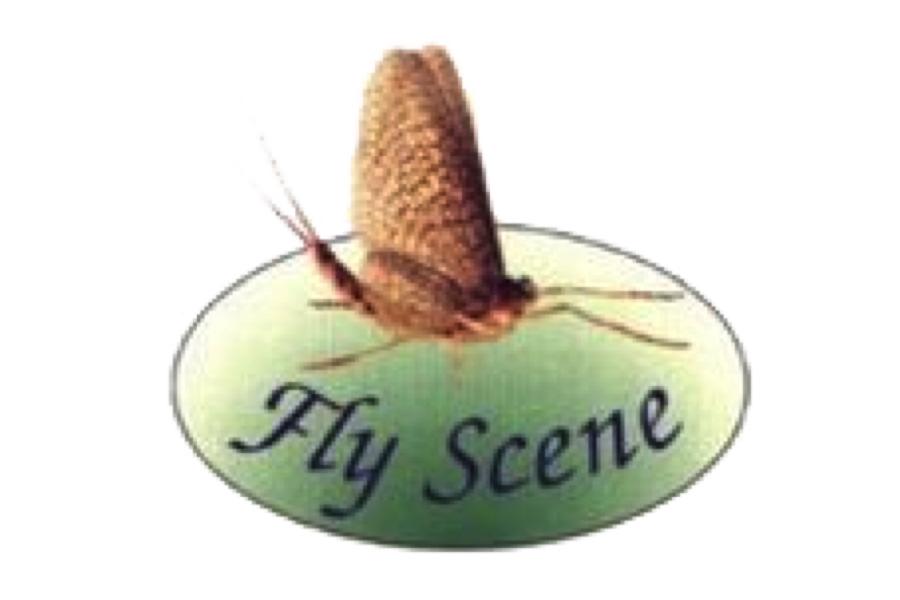 FlyScene