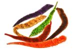 Mangum's Variegated Mini Dragon Tails