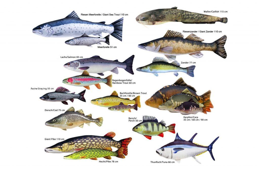 Traun River Texile Fish