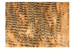 FlyScene Barred Craft Fur Tan (Beige)