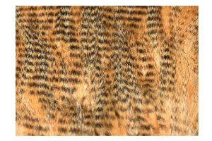 FlyScene Barred Craft Fur Tan (Beige)